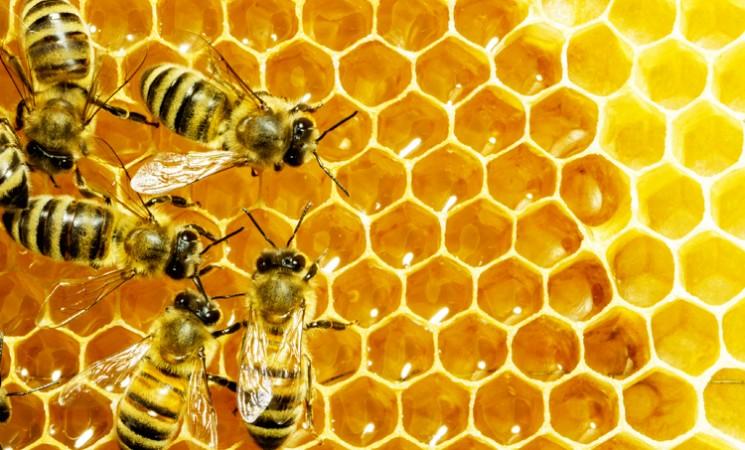 USR a modificat și votat pentru adoptarea proiectului completează legea apiculturii